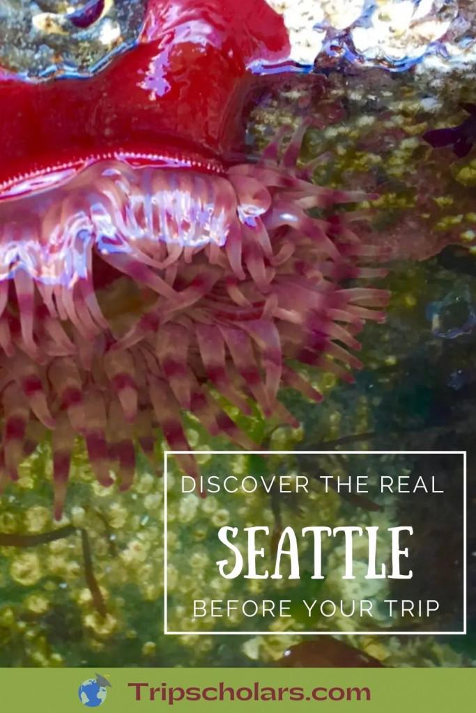 Sea Anemone in Seattle Washington