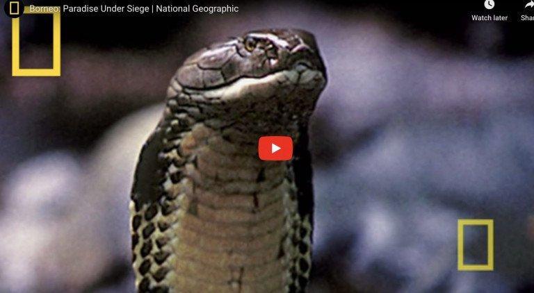 National Geographic Borneo