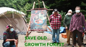 Old Growth Forest Website
