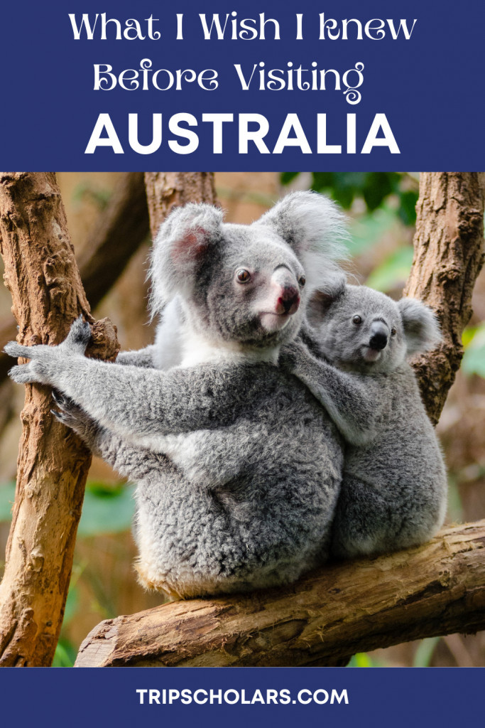 Pin What I wish I knew before mey trip to Australia with Koala Bears