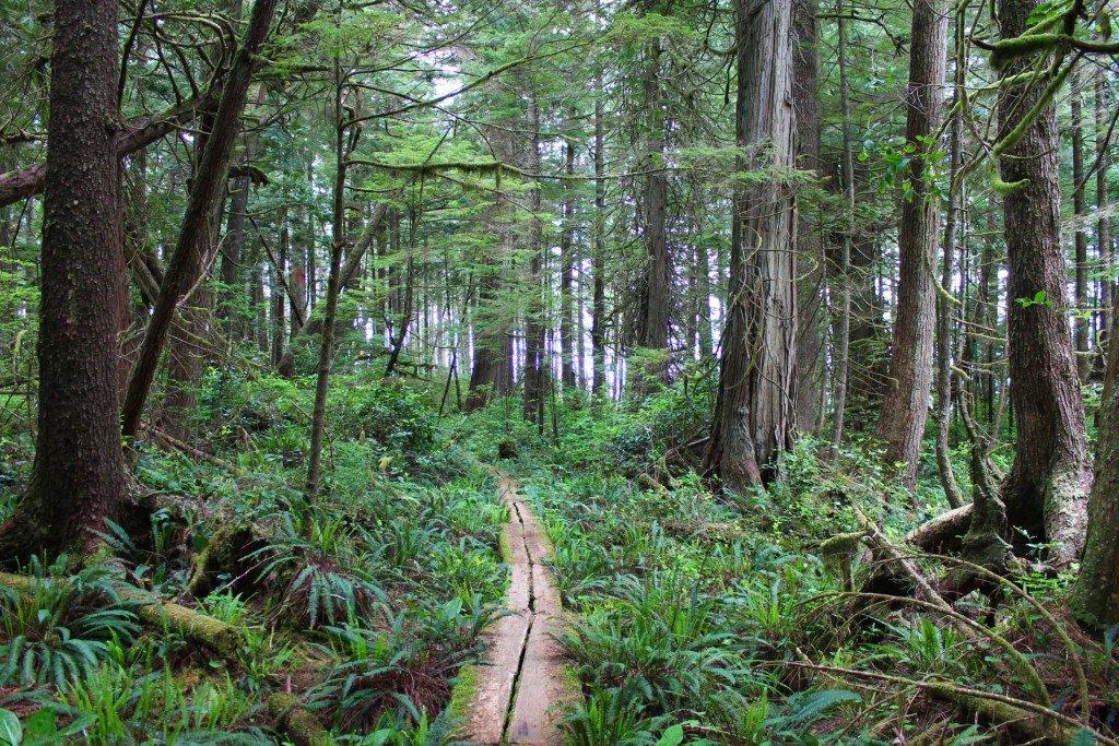 Hiking on Haida, British Columbia, Canada