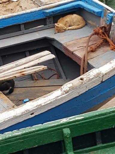 Fishing fleet, cats asleep, Taghazout