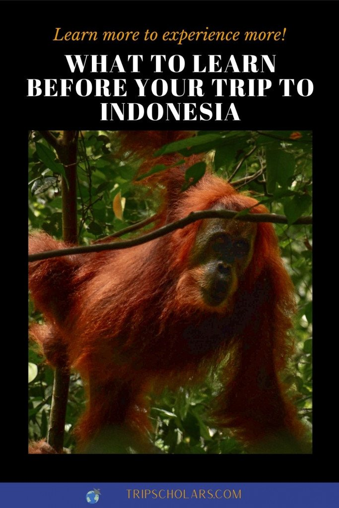 What to Learn Before Your Trip to Indonesia pin, image aof orangatang