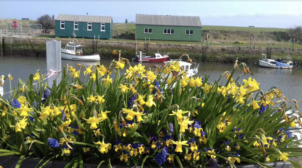 daffodills water, boats and buildings in Scotland
